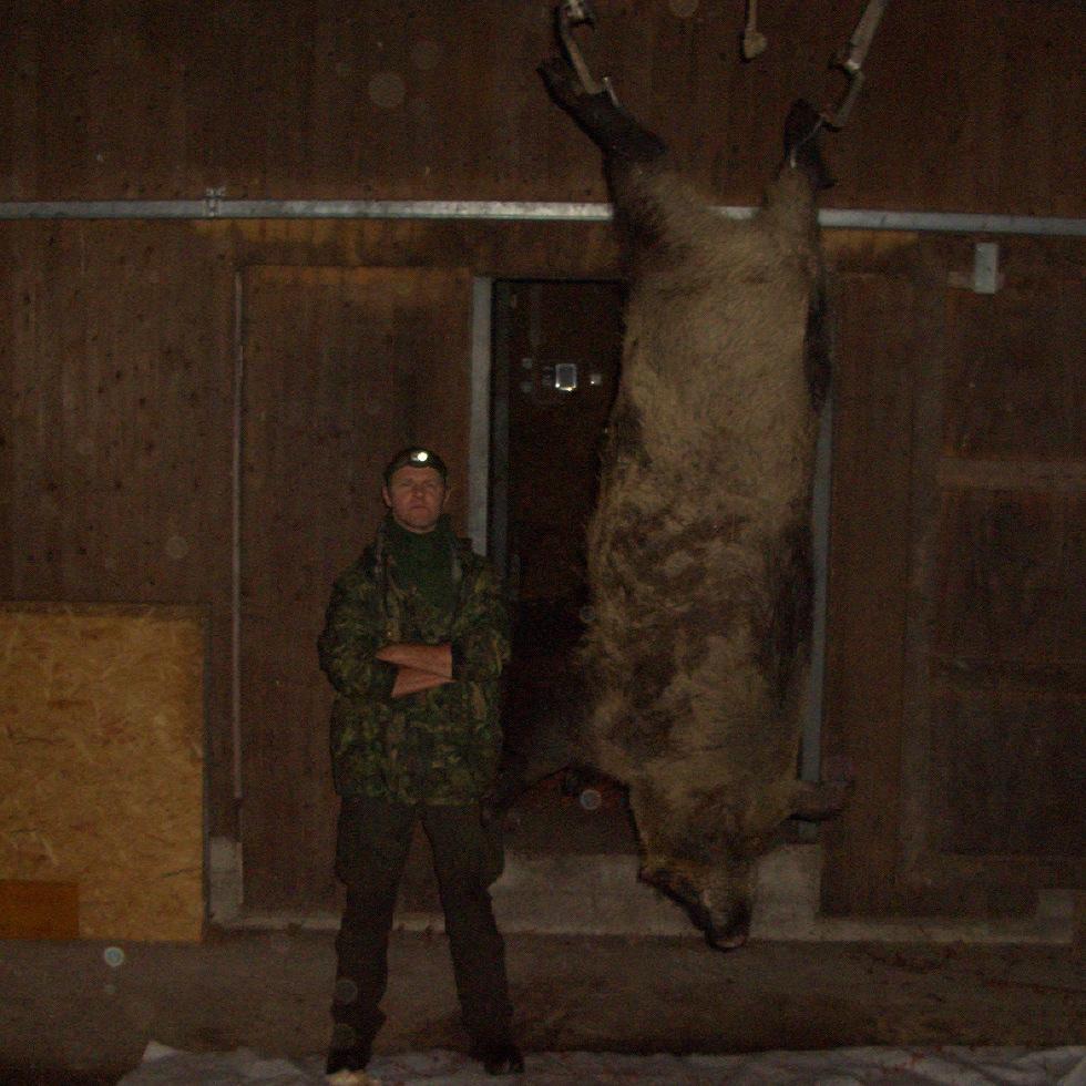 Matigt vildsvin